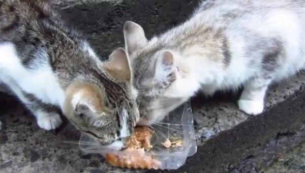 27 голодных кошек