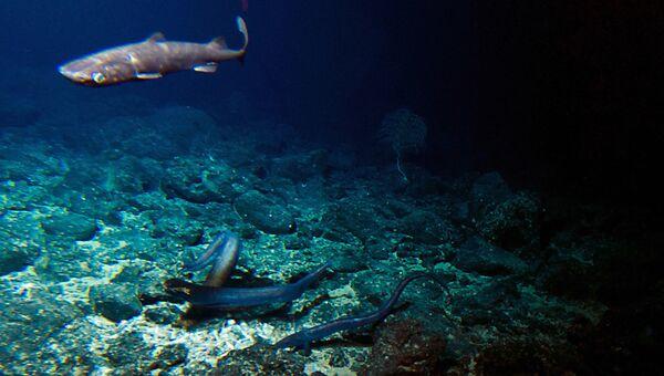 Акула и несколько угрей на дне возле подводного вулкана у берегов острова Гавайи
