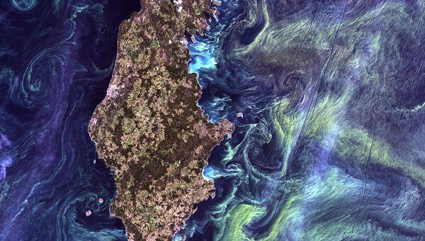 Массовые скоплений фитопланктона в темной воде вокруг острова Готланд в Балтийском море. 2005 год