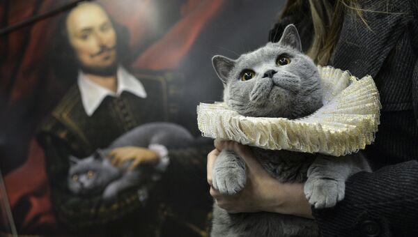 Британский кот в вагоне именного поезда Поэзия в метро с экспозицией Шекспировские страсти
