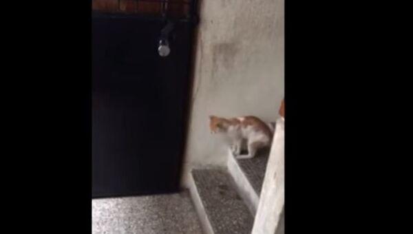 Кошачья смекалка