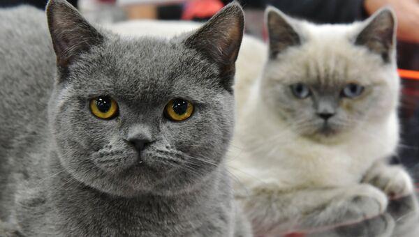 Кошки. Архивное фото