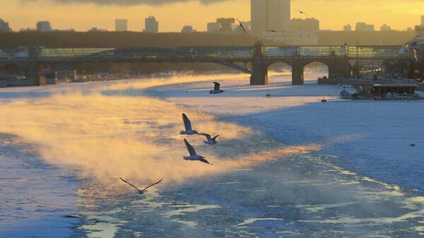 Чайки над Москва-рекой в морозный день