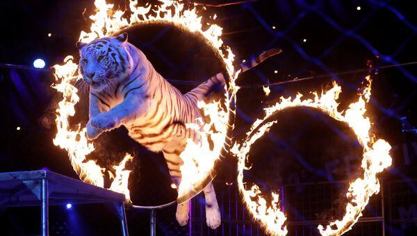 Выступление братьев Запашных, победителей премии Серебряный клоун, на 41-м Международном цирковом фестивале в Монте-Карло, Монако