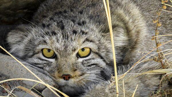 Замаскированная красота: почему у диких кошек разный окрас