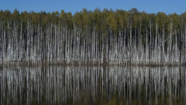 Год экологии. Архивное фото
