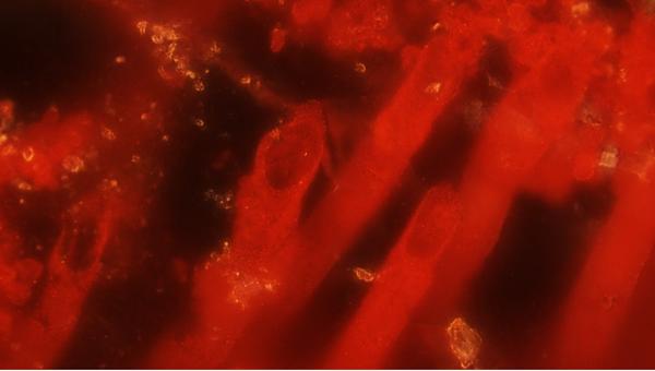 Эти трубки - предположительно древнейшие следы жизни на Земле