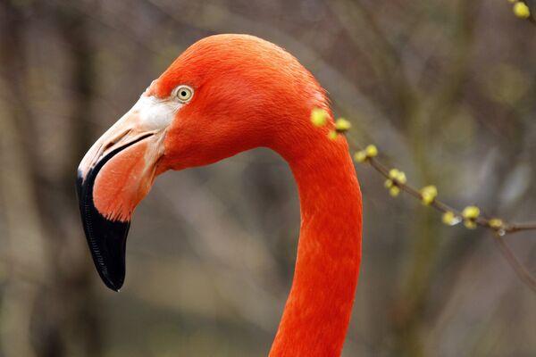 Фламинго в Питтсбургском зоопарке