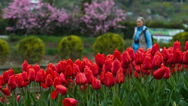 Тюльпаны на выставке Парад тюльпанов в Никитском ботаническом саду в Крыму