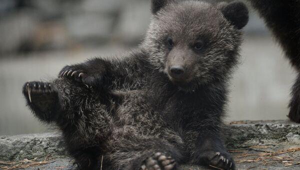 Бурый медвежонок. Архив