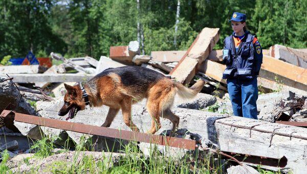 Подготовка и дисциплина, или Как собаки спасают людей в чрезвычайных ситуациях