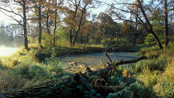 Семь птенцов краснокнижного черного аиста появились в Брянскому лесу