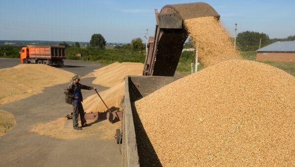 Выгрузка озимой пшеницы на зерновом току. Архивное фото