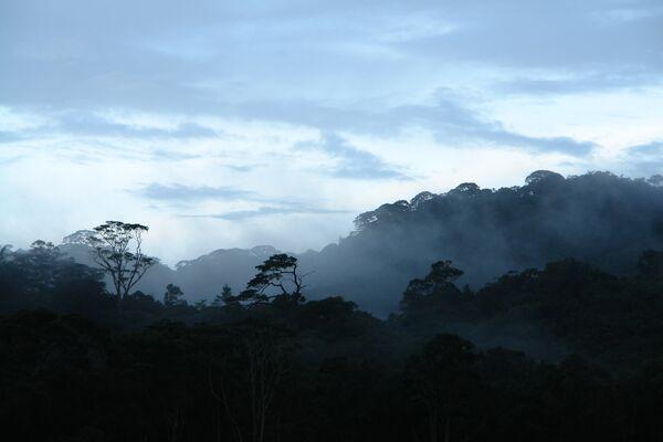 Вершины гор плато Лангибан (Южный Вьетнам) покрыты «эльфийскими лесами»