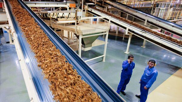 Табачный цех на фабрике Филип Моррис Ижора