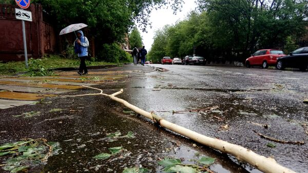 Сломанное ураганом дерево на улице города Москвы