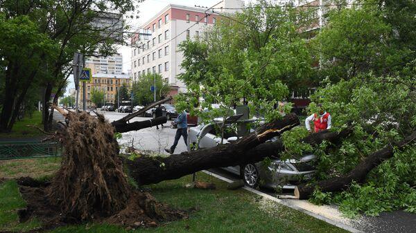 В Москве в среду из-за ветра упали 37 деревьев