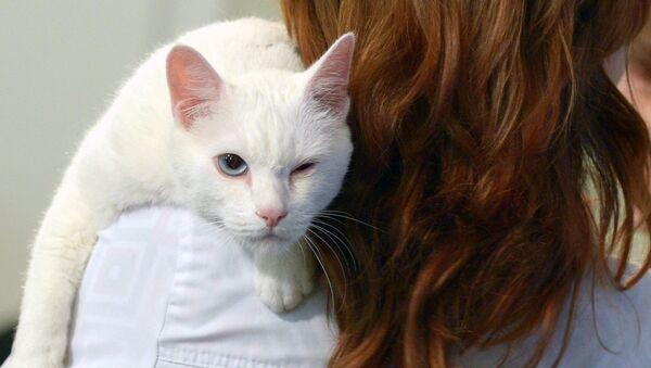 Работающий в Эрмитаже кот Ахилл. Архивное фото