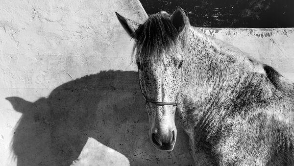 Работа фотографа из Италии Francesca Tonegutti, занявшая 1-ое место в категории Животные в iPhone Photography Awards 2017