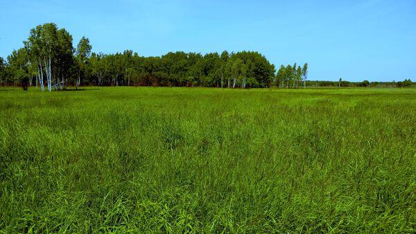 Участок земли, предоставленный в аренду как дальневосточный гектар, в Хабаровском крае