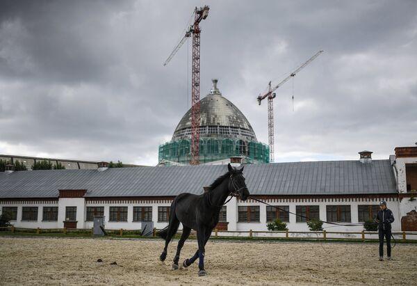 Лошадь на выводном кругу возле павильонов комплекса Коневодство на ВДНХ