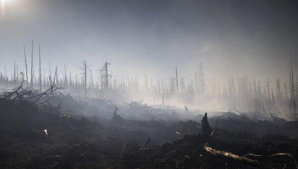 Природные пожары. Архивное фото