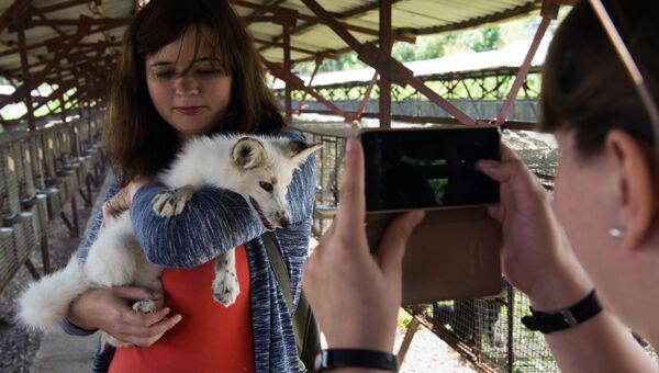 Посетители фотографируются с ручной лисой на экспериментальной звероферме Института цитологии и генетики Сибирского отделения РАН