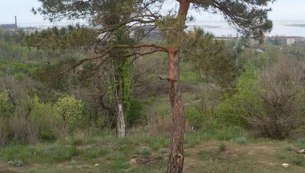 Парк вдов в Волгограде