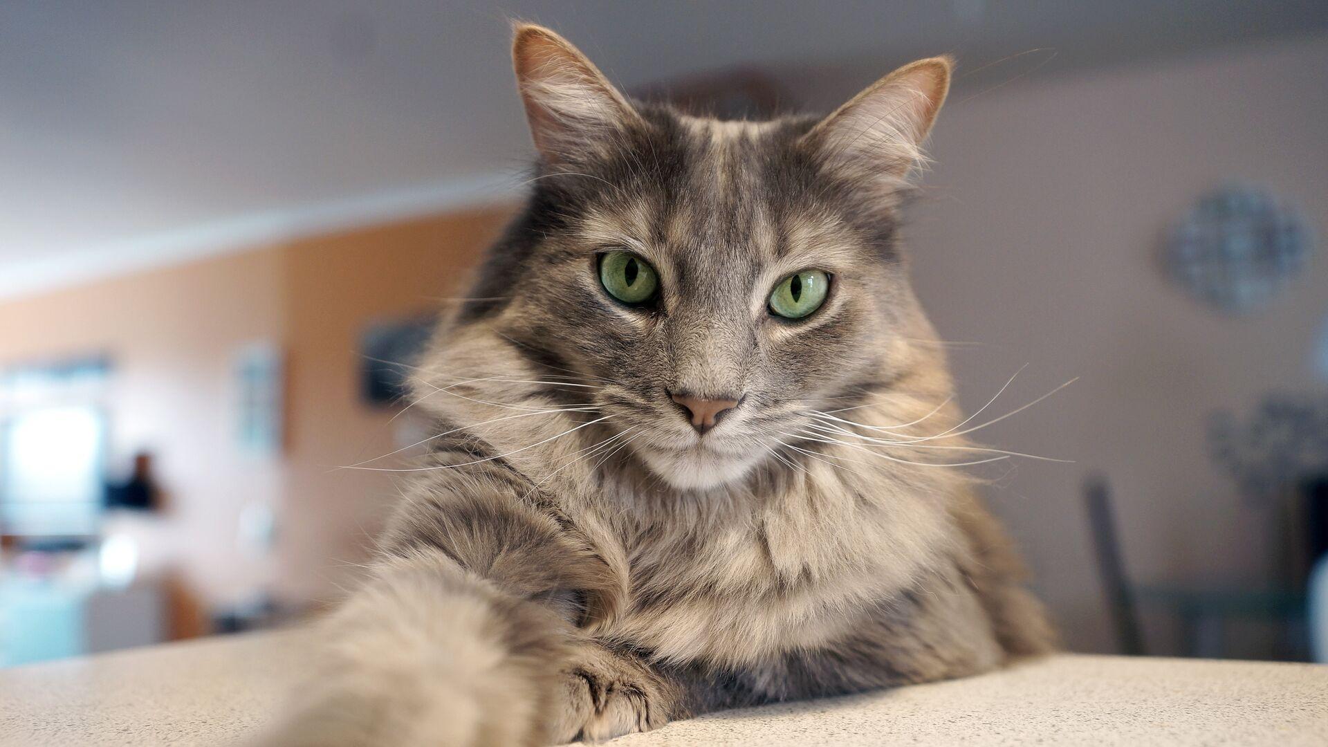В Петербурге ученые обследовали заболевшего COVID-19 домашнего кота