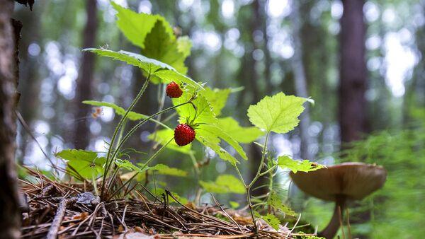 Ягоды в лесу