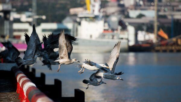 Чайки в Новороссийском морском торговом порту