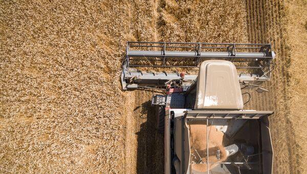 Уборка пшеницы в Краснодарском крае. Июль 2017