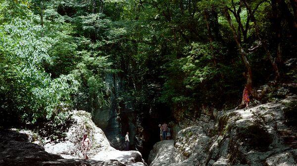 Самшитовый лес на Кубани