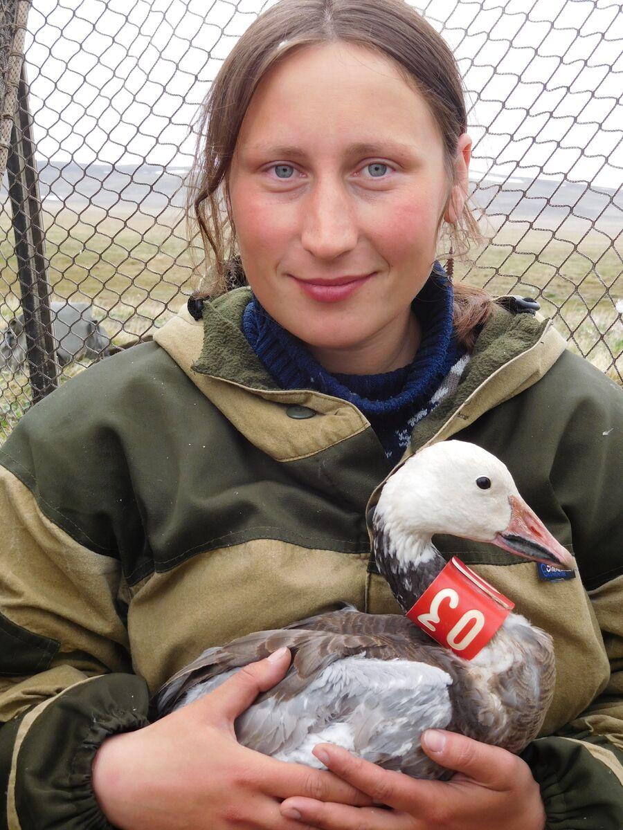 Ульяна Бабий, научный сотрудник государственного природного заповедника Остров Врангеля