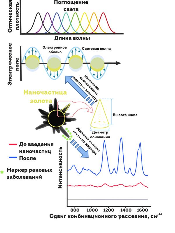 На схеме показана работа золотой наночастицы внутри опухоли