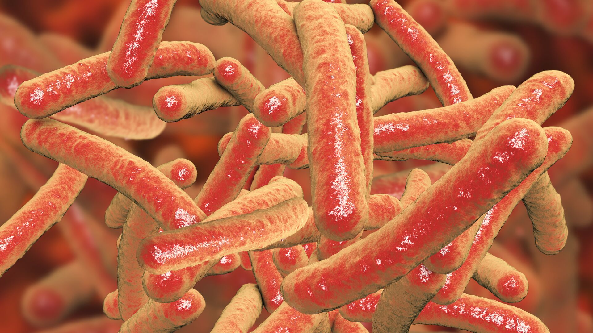 Бактерии Mycobacterium tuberculosis, возбудитель туберкулеза - РИА Новости, 1920, 24.03.2020