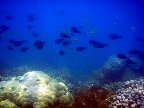 Подводный мир озера Тоба