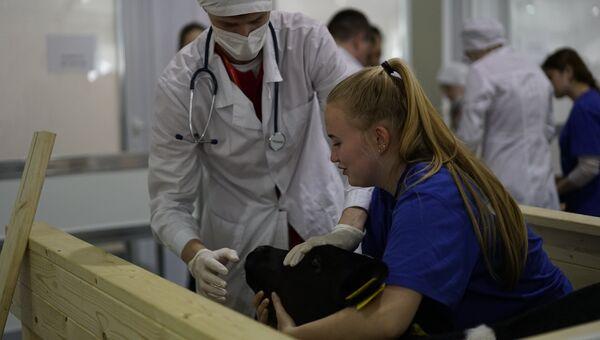 V Национальный чемпионат WorldSkills в Краснодаре. Соревнования в компетенции Ветеринария