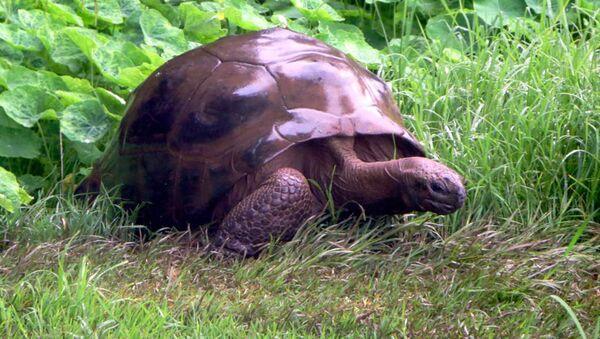 Старейшая в мире черепаха Джонатан