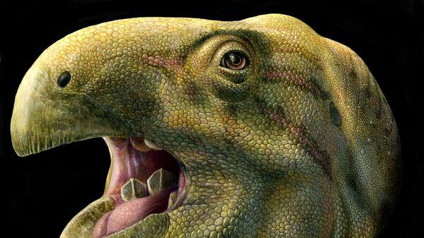 Так художник представил себе динозавра Matheronodon provincialis, чьи зубы никогда не становились тупыми