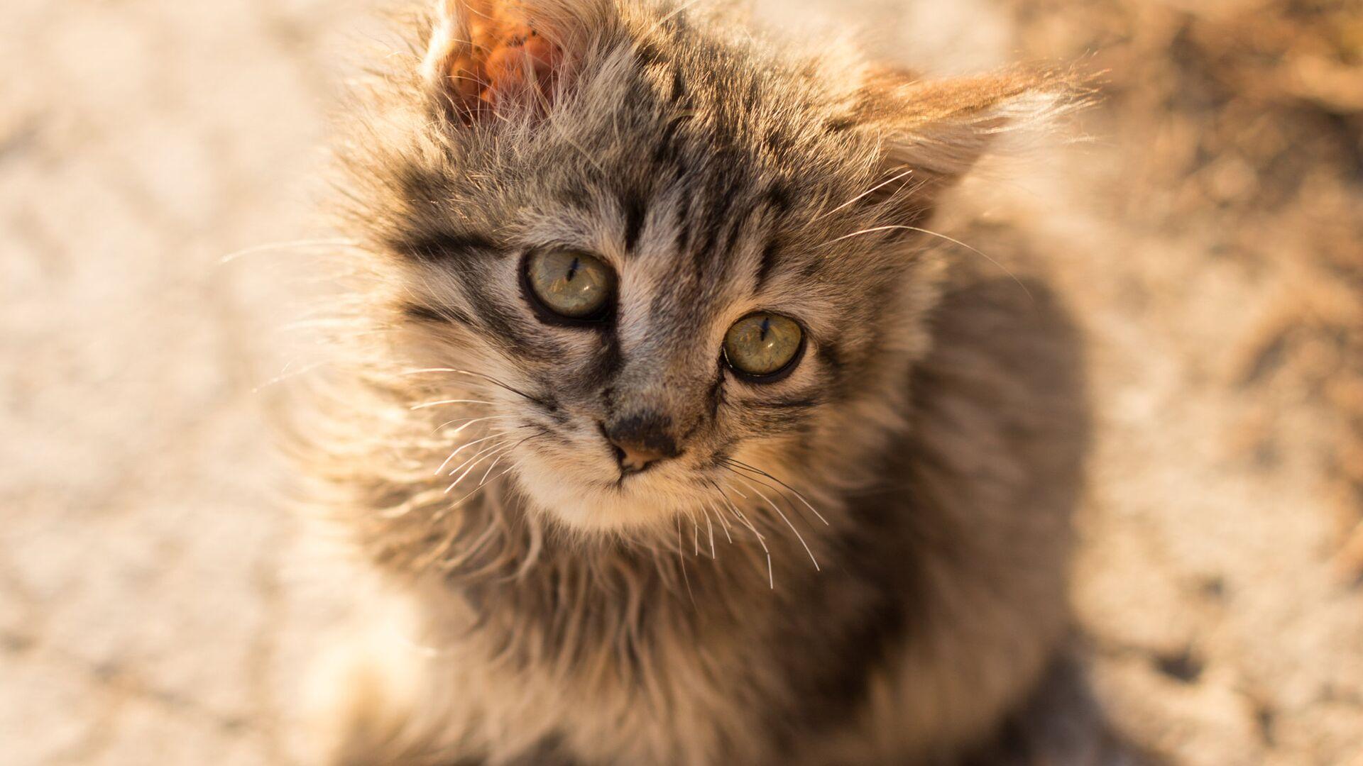 Госдума запретила забирать домашних животных за долги
