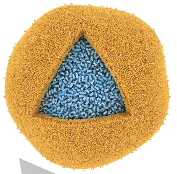Липосома, состоящая из липидов (желтая), заполненная фрагментами МВР (основной белок миелина, myelin basic protein) (голубые), увеличенная в миллион раз. Маленькие хвостики на жёлтой поверхности – остатки маннозы