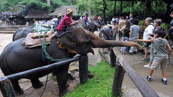 Туристы в слоновой деревне в Таиланде. Архивное фото.