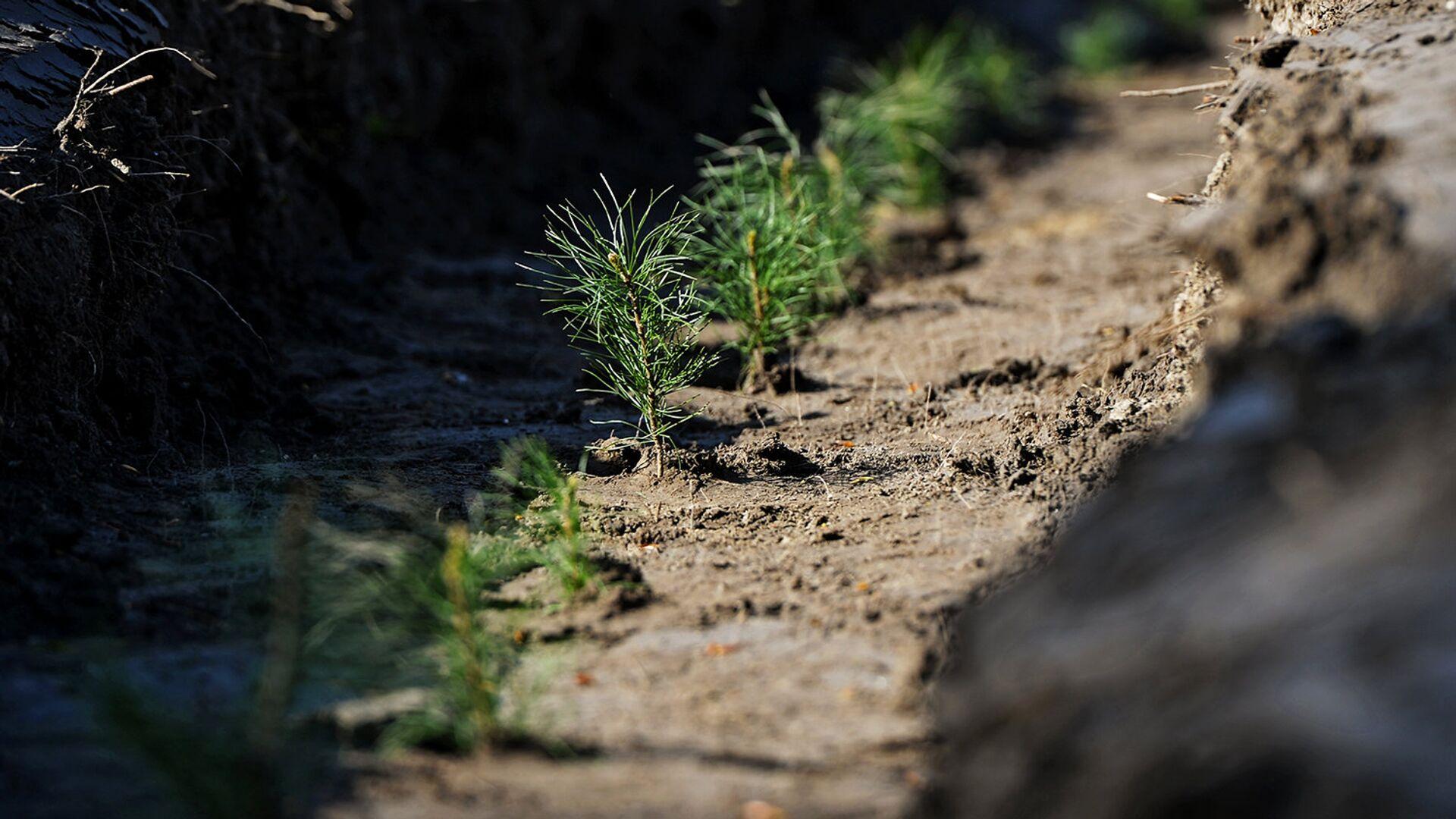 Более 4 тысяч деревьев высадили в Волго-Ахтубинской пойме - РИА Новости, 1920, 21.07.2021