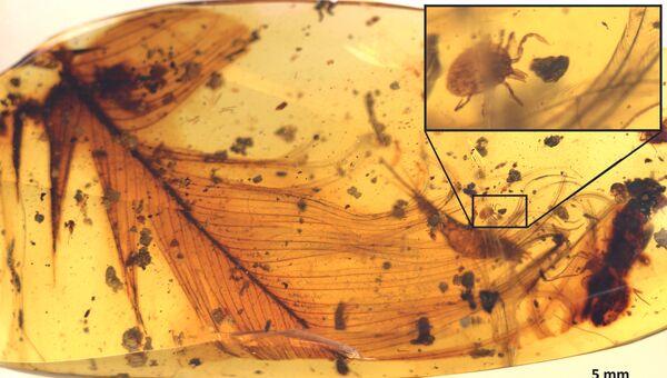 Клещ, найденный рядом с перьями древнего динозавра внутри янтаря из Мьянмы