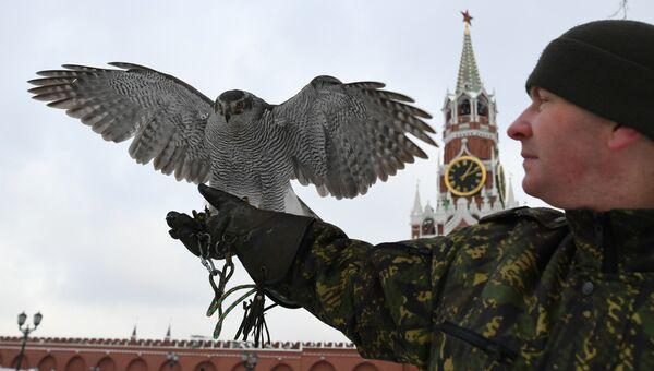 Ястреб Соколиной службы комендатуры Московского Кремля. Архивное фото