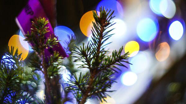 Новогодняя елка. Архивное фото
