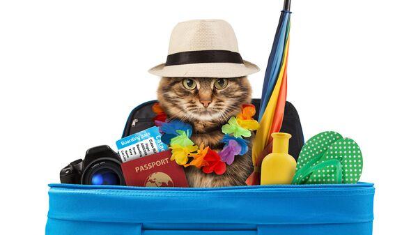 Кошка собралась в отпуск