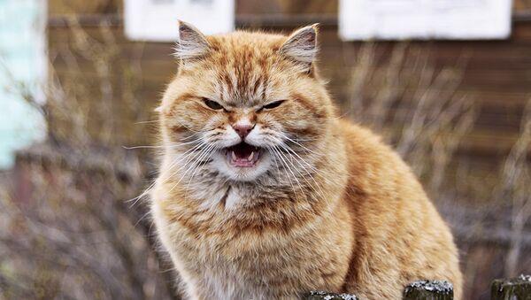 Фото коты обнимаются