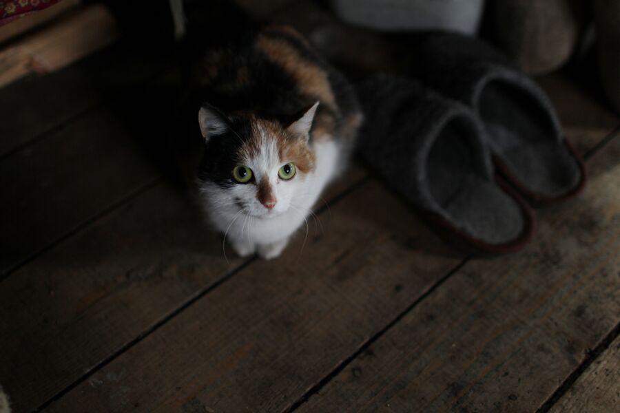 Кошка в доме инока Гурия